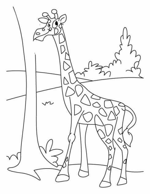 gratis gambar gambar jerapah untuk diwarnai di bawah ini sketsa gambar ...